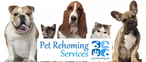 PET REHOMING - REHOME A PET - PETS FOR REHOMING